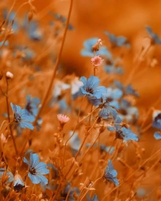 Blue Flowers Field - Obrázkek zdarma pro Nokia Lumia 928