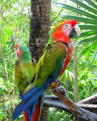 Macaw parrot Amazon forest - Obrázkek zdarma pro Nokia 206 Asha