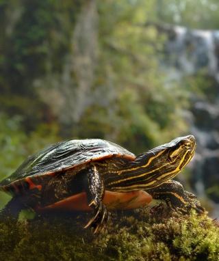 Brown Turtle - Obrázkek zdarma pro 176x220