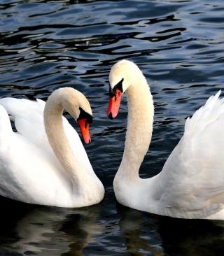 Two Beautiful Swans - Obrázkek zdarma pro Nokia Lumia 505
