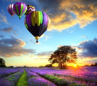 Lavender Field - Obrázkek zdarma pro iPad Air