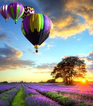 Lavender Field - Obrázkek zdarma pro Nokia Asha 300