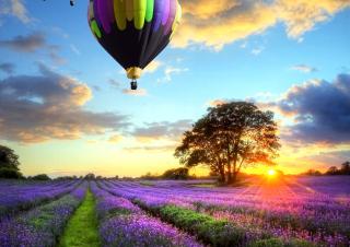 Lavender Field - Obrázkek zdarma pro 720x320