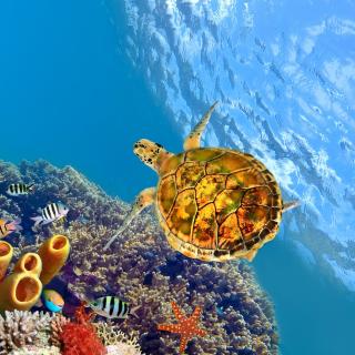 Colorful Underwater World - Obrázkek zdarma pro iPad mini