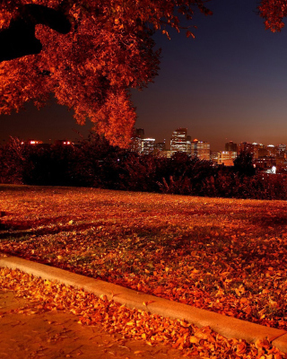 Autumn in Chicago - Obrázkek zdarma pro 240x400