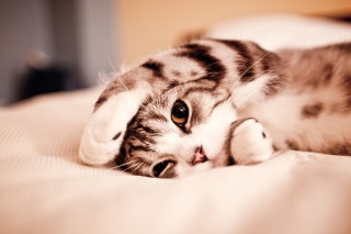 Cute Kitten Wallpaper for Android, iPhone and iPad