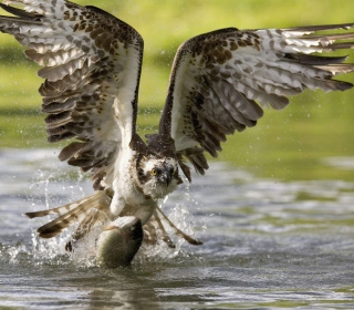 Sea Hawk - Obrázkek zdarma pro 128x128