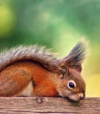 Little Squirrel - Obrázkek zdarma pro Nokia Asha 306