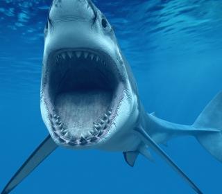 Great White Shark - Obrázkek zdarma pro iPad mini