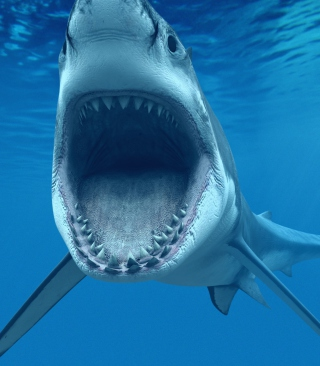 Great White Shark - Obrázkek zdarma pro 1080x1920