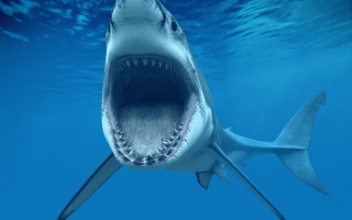 Great White Shark - Obrázkek zdarma pro Fullscreen Desktop 1024x768