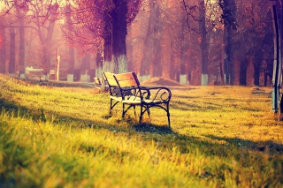 Bench In Park Background for Android, iPhone and iPad