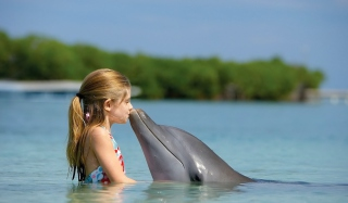 Dolphin's Kiss - Obrázkek zdarma pro 1366x768