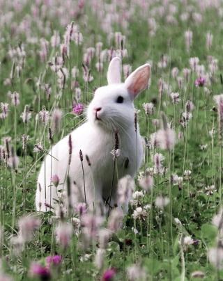 White Rabbit In Flower Field - Fondos de pantalla gratis para Huawei G7300