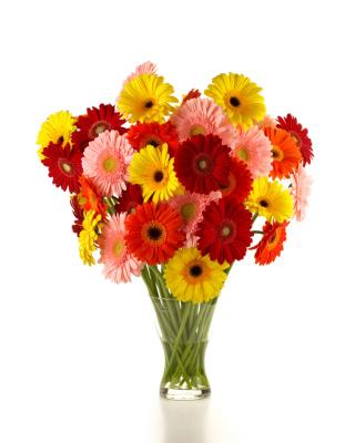 Gerbera Daisy Bouquets - Obrázkek zdarma pro 360x480
