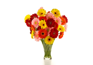 Gerbera Daisy Bouquets - Obrázkek zdarma pro 1280x1024