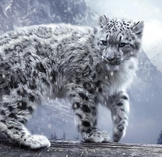 White Leopard - Obrázkek zdarma pro iPad 2
