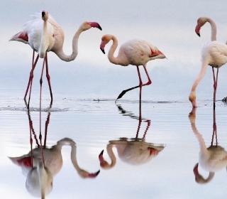 Flamingo - Obrázkek zdarma pro iPad mini 2
