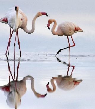 Flamingo - Obrázkek zdarma pro Nokia 206 Asha