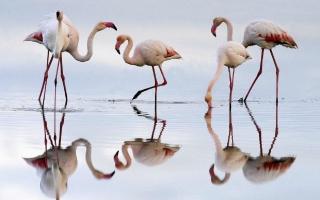 Flamingo - Obrázkek zdarma pro Samsung Galaxy Note 2 N7100