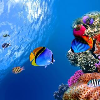 Underwater Life - Obrázkek zdarma pro 128x128
