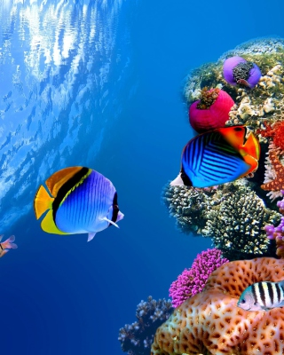 Underwater Life - Obrázkek zdarma pro Nokia Asha 308