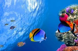 Underwater Life - Obrázkek zdarma pro 1024x768
