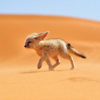 Desert Wolf - Obrázkek zdarma pro iPad