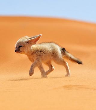 Desert Wolf - Obrázkek zdarma pro Nokia Asha 306