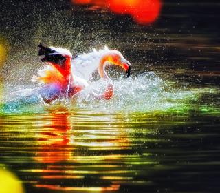 Pink Flamingo Enjoying Water - Obrázkek zdarma pro iPad 3