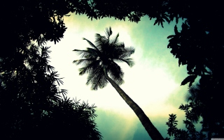 Palm Tree Top Picture for Android, iPhone and iPad