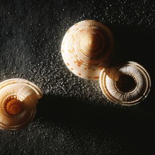 Minimalist Snail - Obrázkek zdarma pro 320x320