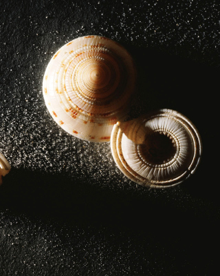 Minimalist Snail - Obrázkek zdarma pro 320x480