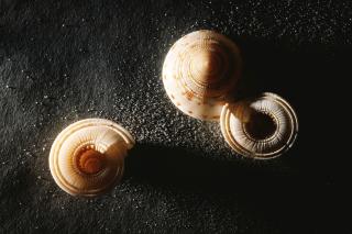 Minimalist Snail - Obrázkek zdarma pro 1366x768