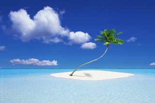 Lonely Palm Tree Picture for Android, iPhone and iPad