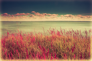 Pink Landscape Background for Android, iPhone and iPad