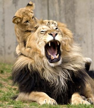 Lion Game - Obrázkek zdarma pro Nokia C5-05
