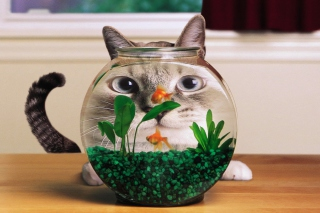 Aquarium Cat Funny Face Distortion Wallpaper for Android, iPhone and iPad
