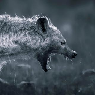 Hyena on Hunting - Obrázkek zdarma pro 208x208