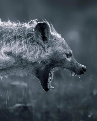 Hyena on Hunting - Obrázkek zdarma pro 768x1280