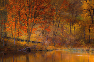 Kostenloses Colorful Autumn Trees near Pond Wallpaper für Android, iPhone und iPad