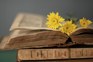 Old Book And Yellow Daisies Wallpaper for Android, iPhone and iPad