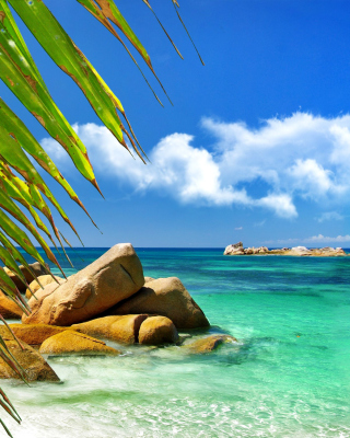 Aruba Luxury Hotel and Beach - Obrázkek zdarma pro Nokia 300 Asha
