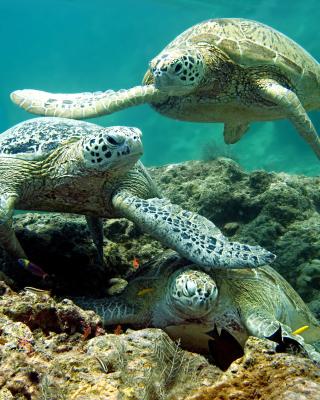 Underwater Sea Turtle HD - Obrázkek zdarma pro 640x960