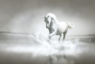 White Horse Picture for Android, iPhone and iPad