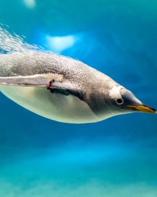 Penguin in Underwater - Obrázkek zdarma pro 240x400