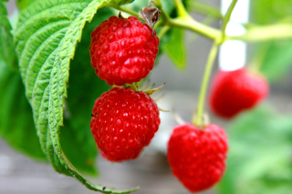 Raspberries Macro Photo Wallpaper for Android, iPhone and iPad