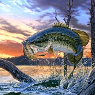 Percidae Fish - Obrázkek zdarma pro 128x128