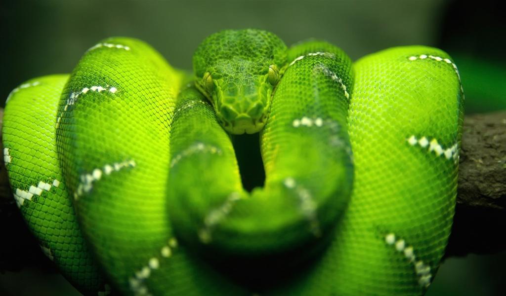 Screenshot №1 pro téma Green Python Snake 1024x600
