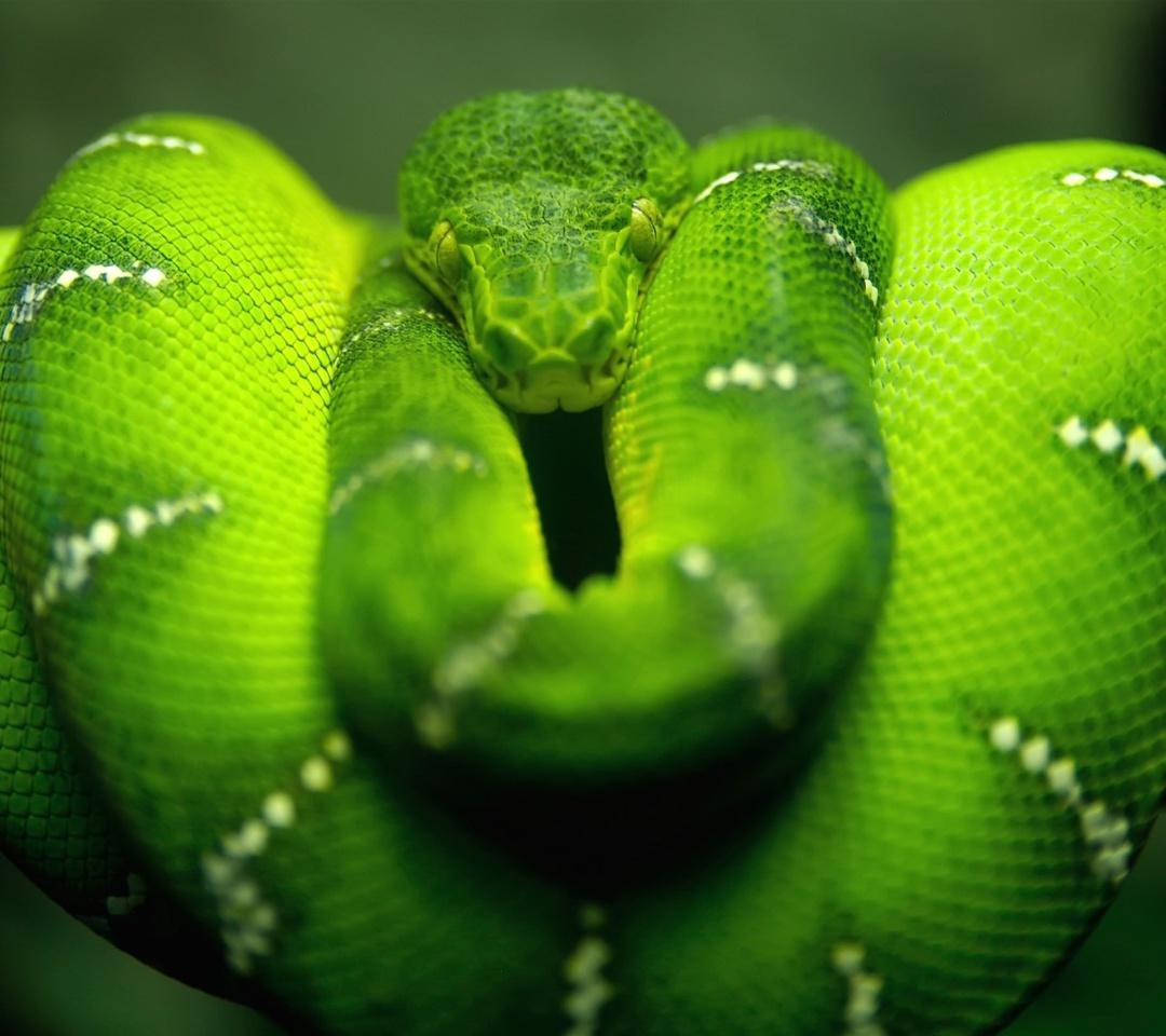 Screenshot №1 pro téma Green Python Snake 1080x960
